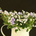 Blossoms Florist Decor & Hiring Services